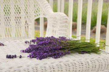 Lavender-wicker