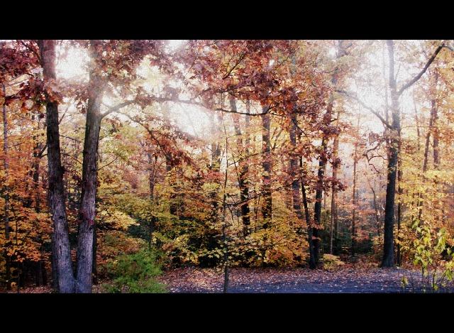 Autumn ~ From My Front Door